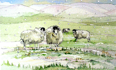 Rough Fell Sheep on the Howgills