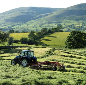 Haymaking on Frostrow Fell